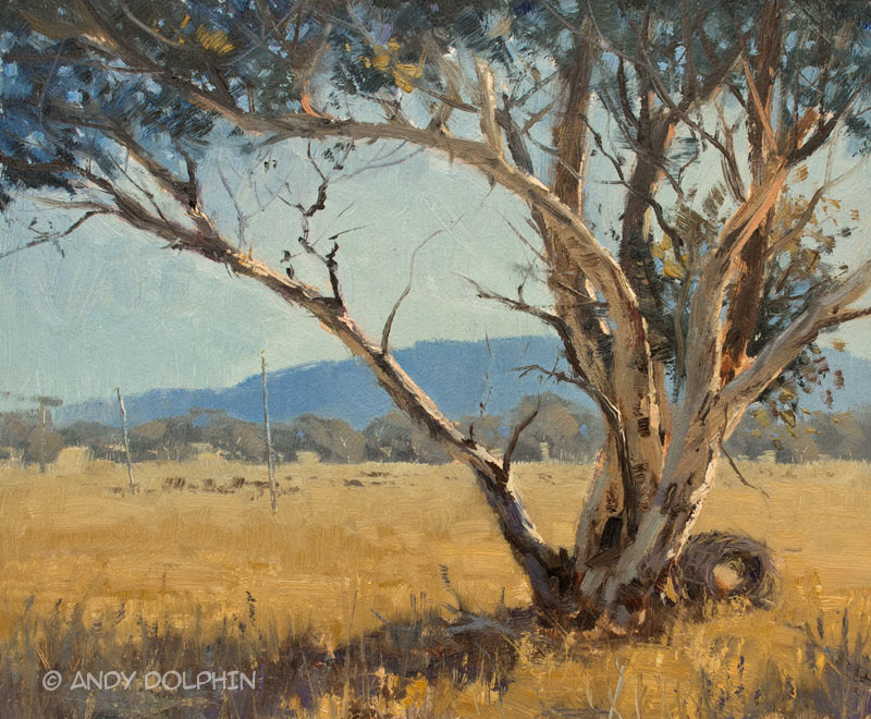 plein air oil painting of white gum, wandoo in western australia by Andy Dolphin